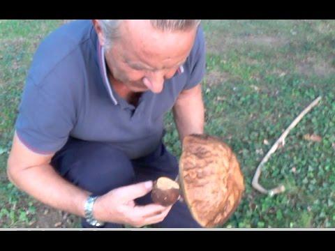 Come trattare un piede di gambe a un fungo