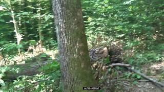 Vitlo Krpan 5T SI - Rad u šumi