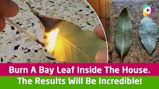 Burn A Bay Leaf Inside The House  The Results Will Be Incredible!
