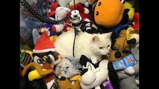 CAT LOCKED INSIDE CLAW MACHINE! | JOYSTICK