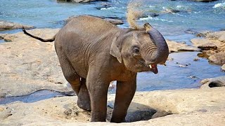Cute Baby Elephants Compilation 🐘 [Funny Pets]