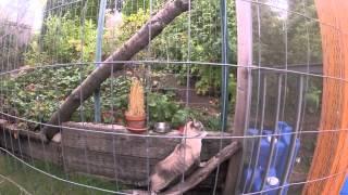 Custom Creative Outdoor Cat Enclosure!