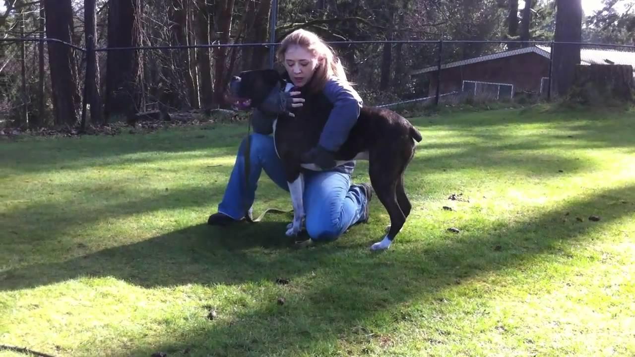 Инструктор спас собаку, у которой остановилось сердце