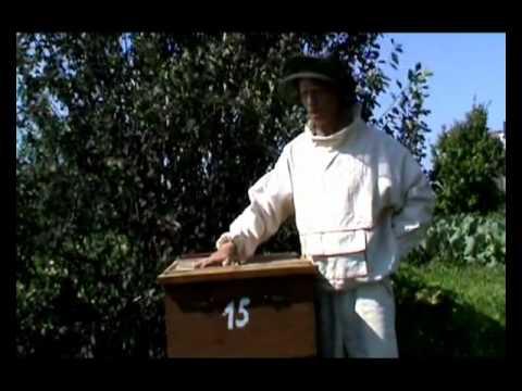 Пчеловодство (уникальный метод - 3-5 фляг меда с улья)