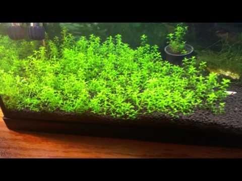 Jebo 503 aquarium filter review