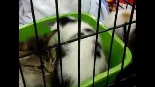 Dori's Darlings Cat Rescue
