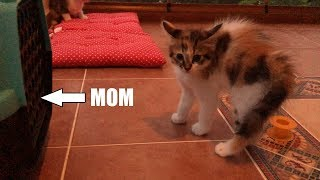 Kittens Almost Didn't Recognize The Mother Cat After Her Clinic Visit!