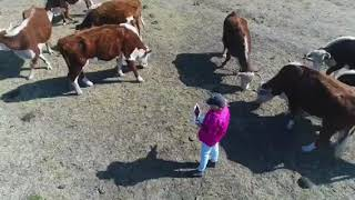 Please help-Name a cow and become her guardian angel