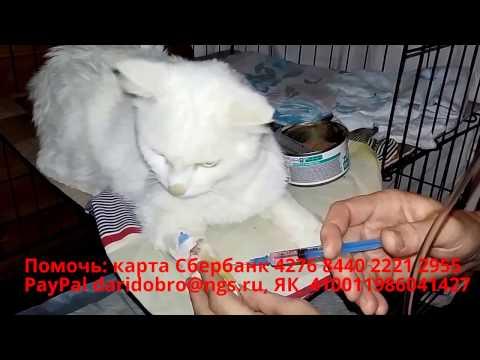 Спасение белого кота Новосибирск Лечение гепатита животных в приюте