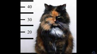 Коты атакуют собак, людей и не только!
