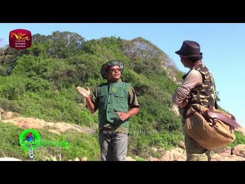 Sobadhara - සොබාධාරා | Season 2 | Episode - 17 | 2018-05-11 | Rupavahini Documentary