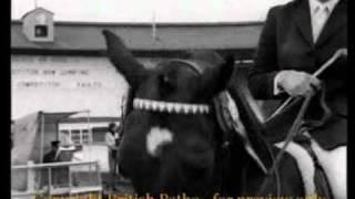 video of Stroller