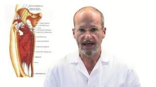 27 Tendinitis del Aductor - Sport Clinics Ripoll y de Prado