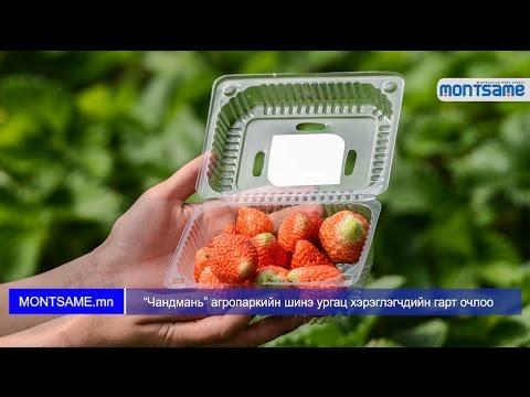 """""""Чандмань"""" агропаркийн шинэ ургац хэрэглэгчдийн гарт очлоо"""