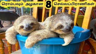 ரொம்பவும் அழகான செல்லப்பிராணிகள் || Eight Beautiful Pets Animals || Tamil Info Share