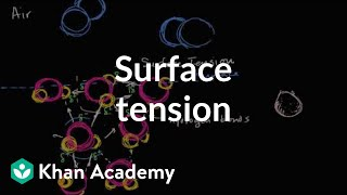 Surface tension | States of matter and intermolecular forces | Chemistry | Khan Academy
