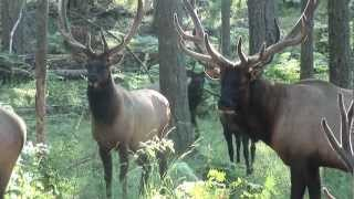 """Around the Pacific Northwest"" with Grant Goodeve exploring NW Trek wildlife park"
