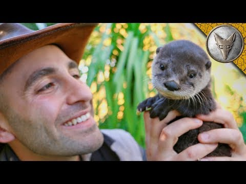 The Most Adorable Baby Otter Ever Will Teach You About Otters