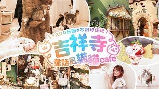 吉祥寺童話風貓貓Cafe1200日圓不限時任玩!