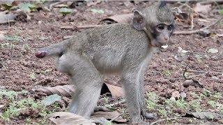 Pity Baby Monkey Cut Tail And Broken Eye ST811 Mono Monkey