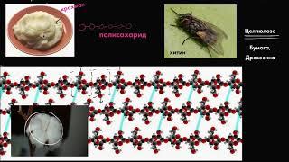 Гидролиз | Макромолекулы | Биология