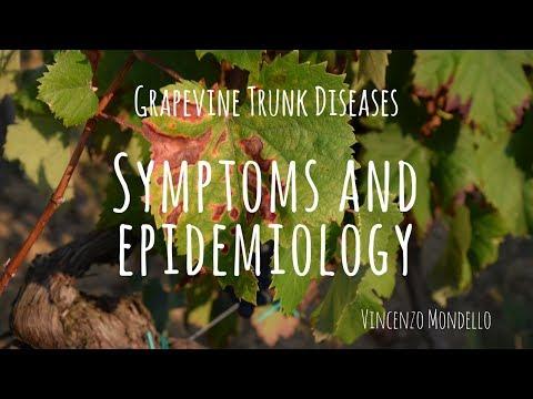 , title : 'Sintomatologia e epidemiologia delle malattie del legno della vite