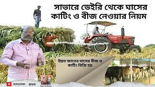 উন্নত জাতের ঘাসের বীজ ও  কাটিং বিক্রি হয় সাভার ডেইরি খামারে | grass seed sell farm