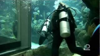 Shark Week 2011: Shark Diving 101