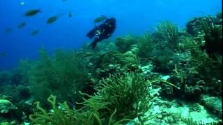 Curacao Shorts: Ch.2 - Beaches & Diving