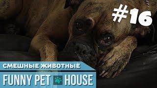 СМЕШНЫЕ ЖИВОТНЫЕ И ПИТОМЦЫ #16 ОКТЯБРЬ 2018 [Funny Pet House] Смешные животные