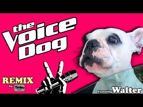 The Voice Dog (Remix) Its growing on me