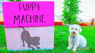 BOX FORT PUPPY MACHINE!!