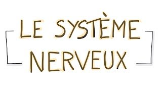Vignette de LES NEUROSCIENCES EN DESSINS : Le système nerveux