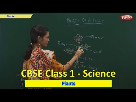 Plants | Class 1 CBSE Science | Science Syllabus Live Videos | Video Training