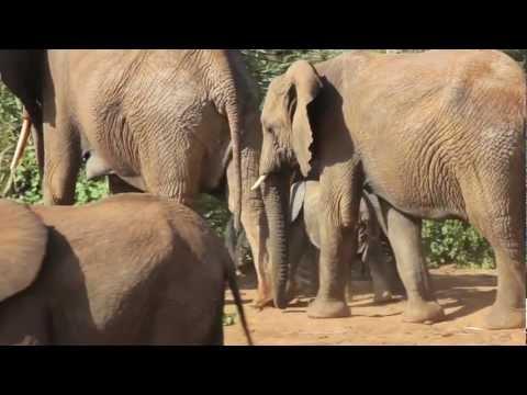 Familiereis Kenia & Tanzania