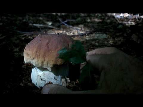 Trattamento di unghie di gambe per un fungo
