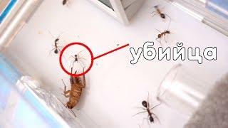 Что с моими муравьями? Моя коллекция муравьев! Муравьи убийцы!