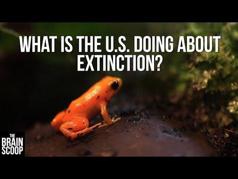 Endangered Species: an explainer