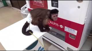Смешные обезьяны Приколы про обезьян Funny monkeys 2018