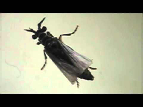 Kung ano ang mga bawal na gamot laban sa bituka bulate sa mga bata