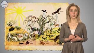 Биология 7 класс. Многообразие простейших