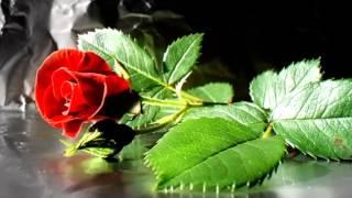 BERT KAEMPFERT-----------RED ROSES FOR A BLUE LADY