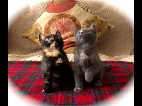 Quẩy lên nào anh em mèo ơi