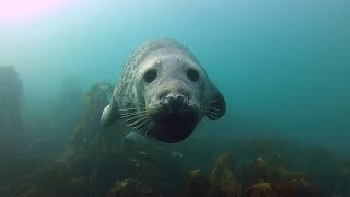Seals are just Puppy dogs that live in the Sea.