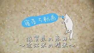 寝落ち動画 〜近江こだわり米の精米〜