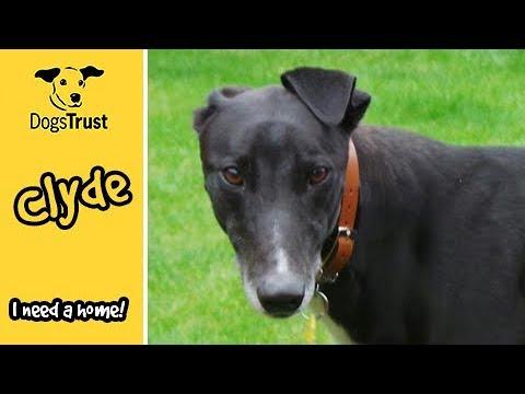 Meet Clyde! | Dogs Trust West Calder