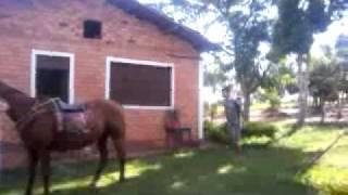 Junninho , Melhor Do Melhor Do Mundo Em Muntar Em Cavalo KKK