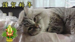 シベリア猫ミール君 第6弾 (平成29年1月13日公開) /Siberian cat vol.6 by akita pref.
