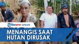 Suku Baduy Menangis Hutan 2 Hektar Dirusak Penambang Liar, Minta Tolong ke Pemerintah