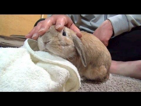 Chú thỏ cute phản ứng khi chủ dừng vuốt ve